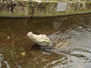 Die Krokodil-Statue von Freiburg (Fotorechte: Dario schrittWeise)