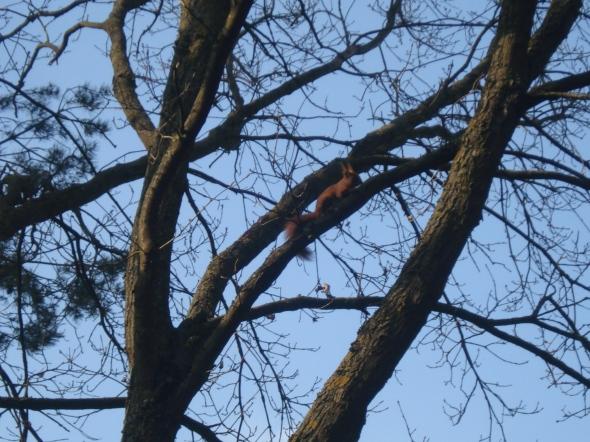 Freches Eichhörnchen auf dem Weg (Foto: schrittWeise, 2017)