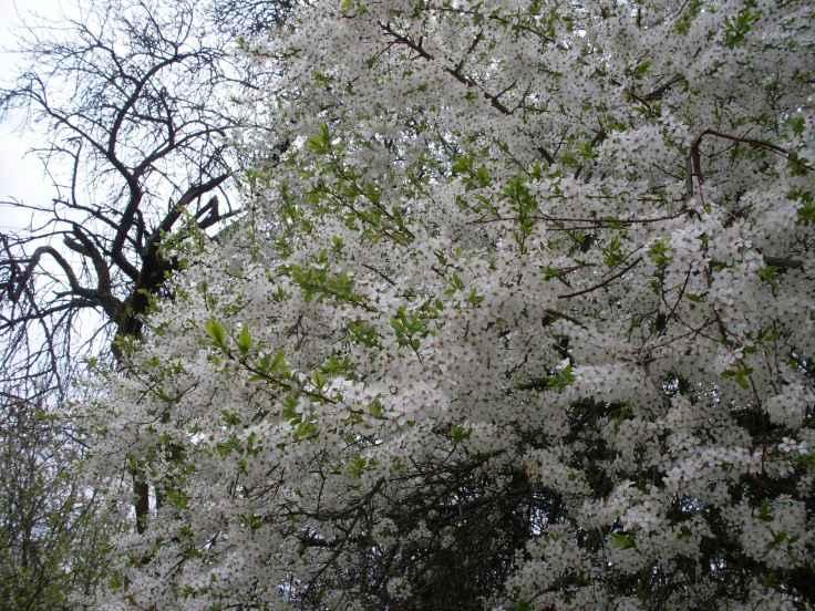 Gräfenberg im Frühling