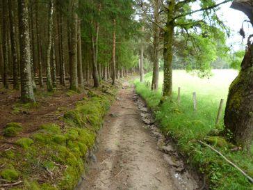 Cäsars Weg mit Entwässerungsgräben (Fotorechte: schrittWeise)