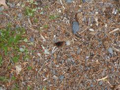 Flieg, kleiner Schmetterling, flieg (Fotorechte: schrittWeise)