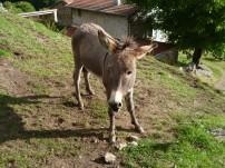 Esel in Rochegude (Fotorechte: schrittWeise)
