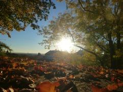 Blätter im Sonnenlicht (Fotorechte: Dario schrittWeise)