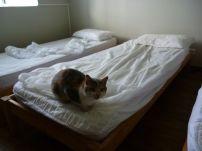 Wieder springt eine Katze ungefragt aufs Bett (Fotorechte: schrittWeise)