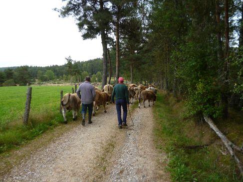 Bauern mit ihrer Kuhherde (Fotorechte: schrittWeise)