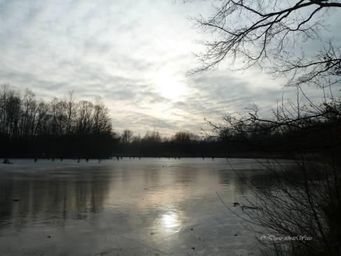 Der Teich im Marienbergpark