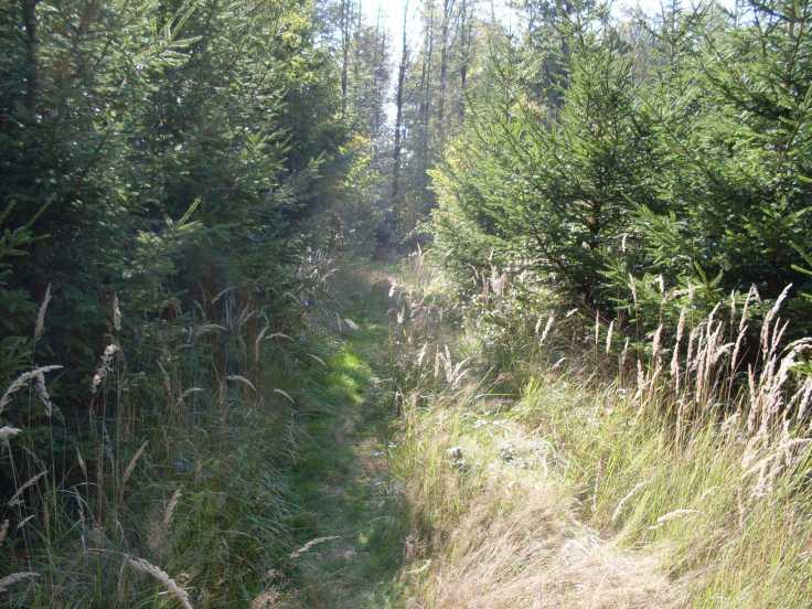 Ein Waldstück kurz nach Schrozberg (Fotorechte: Dario schrittWeise)