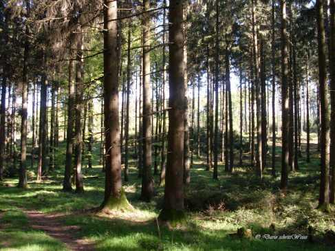 Gerade Wälder