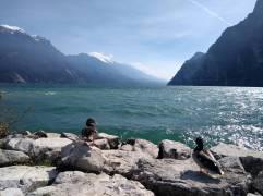 Enten am Ufer vom Gardasee (Fotorechte: Dario schrittWeise)