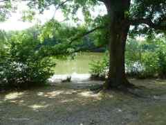 Der Sommer im Marienbergpark