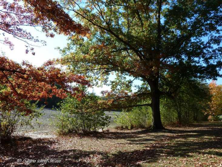Der Herbst im Marienbergpark